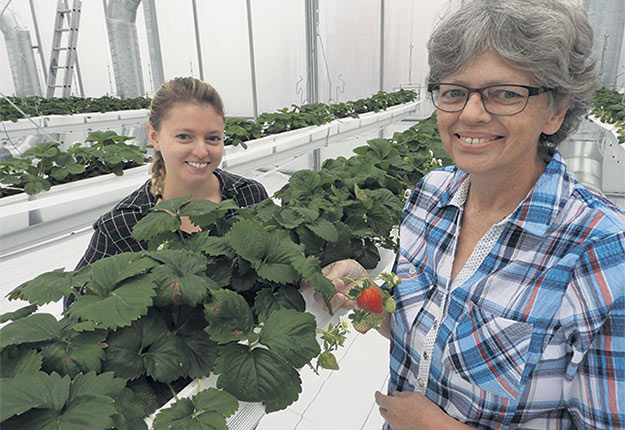 Catherine Côté et sa mère Paule Lebeuf, d'Explora-Fruits à Baie-Saint-Paul, prévoient optimiser leurs installations pour produire davantage de fraises de serre. Photo : Gracieuseté de Catherine Côté