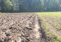 Résultat du labour avec une charrue déchaumeuse permettant l'enfouissement du faux semis. Photos: Amazone