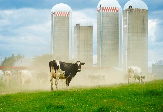 Le rapport note que des pays d'Europe ont tendance à soutenir directement les producteurs en régie biologique par un paiement à l'hectare récurrent. Photo : Archives/TCN