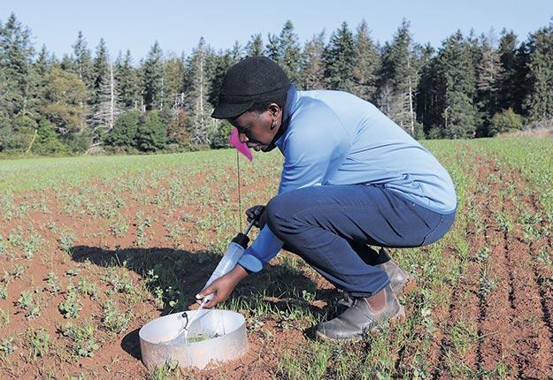 Judith Nyiraneza, chercheuse chez Agriculture et Agroalimentaire Canada, récolte un échantillon dans un instrument conçu pour récupérer la terre détachée par la pluie, afin de suivre l'évolution de l'érosion et du lessivage. Des membranes spéciales avaient aussi été installées pour suivre de façon plus serrée les taux de nitrates. Photo : Gracieuseté de Judith Nyiraneza