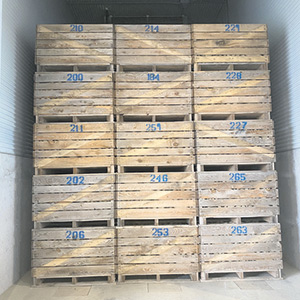 Pour la phase deux du projet de recherche, quelque 40000tubercules de pommes de terre sont testés. Ils sont répartis dans des caissons, chacun séparé en quatre unités d'expérimentation.