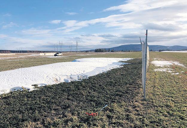 Un projet mené par une entreprise de services-conseils en agroenvironnement au Bas-Saint-Laurent conclut que l'utilisation de haies brise-vent pourrait permettre d'améliorer la réserve en eau potable des fermes. Photos : Gracieuseté de Terre-Eau