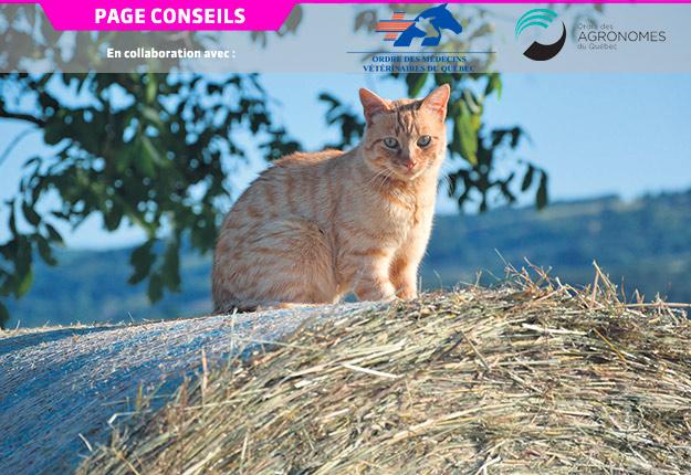 Les chats sont reconnus comme étant de bons prédateurs, ce qui fait d'eux des partenaires hors pair pour la gestion de la vermine à la ferme.
