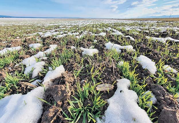 Le sursemis sur sol gelé consiste essentiellement à épandre les semences à la volée durant la période printanière de gel et dégel. Photo : Shutterstock