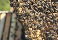 Une unité de décontamination permettrait de désinfecter le matériel apicole sans repartir le cadre à zéro. Photo : Archives/TCN