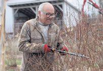 Claude McClure craint de perdre sa récolte de bleuets en corymbe si un gel survient. Les bourgeons dans ses arbres sont anormalement gonflés à ce temps-ci de l'année. Photo : Caroline Morneau/TCN