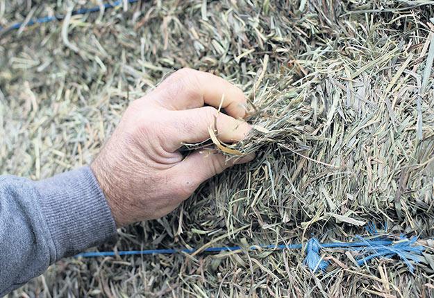 Germain Lefebvre précise que si le foin sèche au champ trop longtemps lorsque les conditions climatiques ne favorisent pas le séchage, il perdra de son odeur et de sa couleur. Photo : Gracieuseté Novations AGL