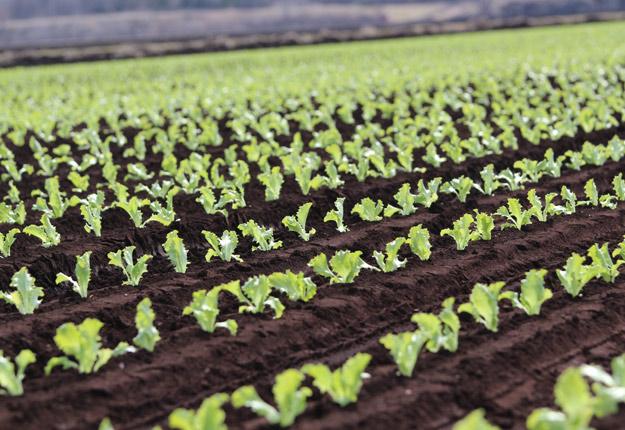 Des producteurs de la Montérégie songent à semer ou planter plus tôt cette année. Photo : Archives/TCN