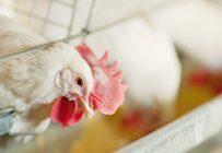 Les producteurs d'œufs et de volailles obtiendront leurs compensations sous forme d'aide à l'investissement et de la promotion. Photo : Archives /TCN