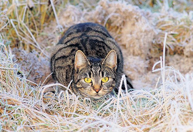 Le nouveau programme de la SPA de Québec vise à placer des chats peu familiers avec l'humain. Photo : Gracieuseté de la SPA de Québec