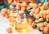 L'huile d'argousier de haute qualité est obtenue par extraction supercritique.