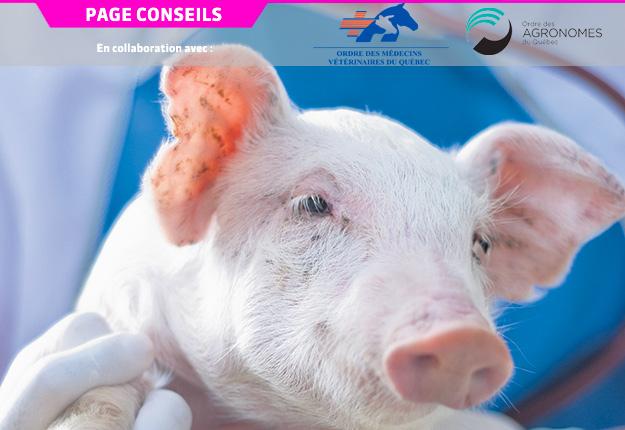 Le VSRRP est un pathogène d'importance pour l'industrie porcine et présentement, il n'y a aucun traitement antiviral ou vaccin efficace contre celui-ci.