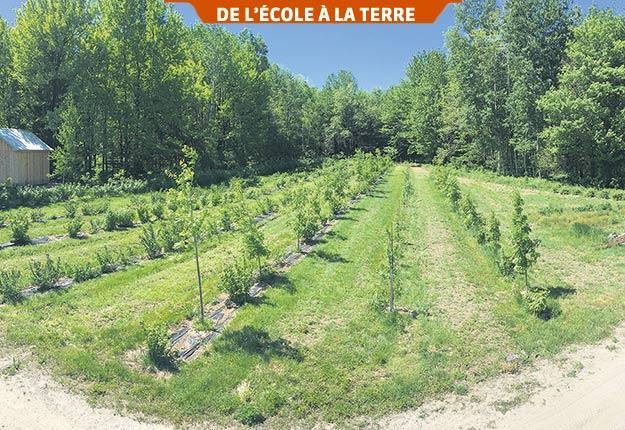 Premier site de la forêt nourricière de l'Institut national d'agriculture biologique implanté en 2017. Photo : Archives/TCN