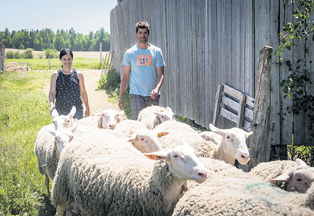 Annie Viens et son conjoint Maxime Paré élèvent des brebis à Compton, en Estrie. Ils transforment le lait qu'ils produisent en yogourt et n'ont aucun problème à écouler l'entièreté de leur production sans devoir sortir de la région de Sherbrooke. Photos : Archives/TCN