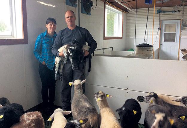 Karine Fortier et Marc-Antoine Roy ont repris les rênes de l'entreprise familiale Les Bergeries Malvibois et Newport, établie depuis 1978 à Newport, en Estrie. Les bons prix de l'agneau ont donné une bouffée d'air frais à l'entreprise. Photo : Gracieuseté de Marie-Antoine Roy