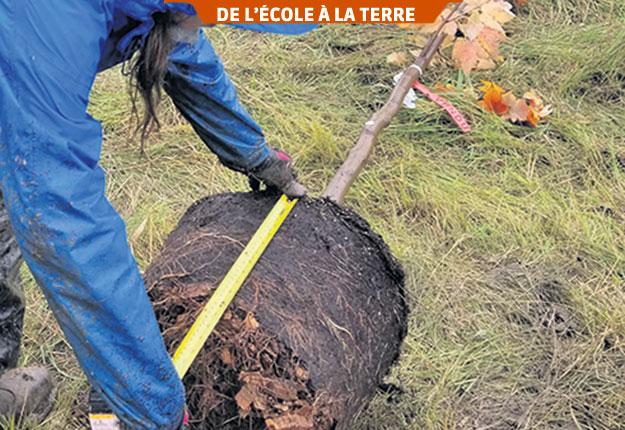 Les mesures de la motte détermineront les dimensions de la fosse de plantation. La fosse doit avoir deux fois la largeur de la motte et la même profondeur. Photos: Gracieuseté du Collège Montmorency