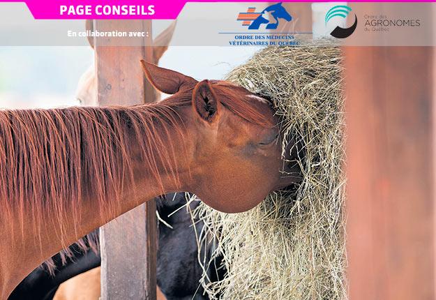 Les chevaux dans les fermes ne sont plus employés comme des travailleurs, mais plutôt à titre de compagnons. Il est donc normal d'adapter leur alimentation en conséquence.