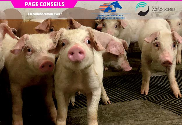 Les co-infections bactériennes ou virales sont très présentes dans les élevages et peuvent engendrer une augmentation des manifestations cliniques et porter atteinte à la santé des animaux.