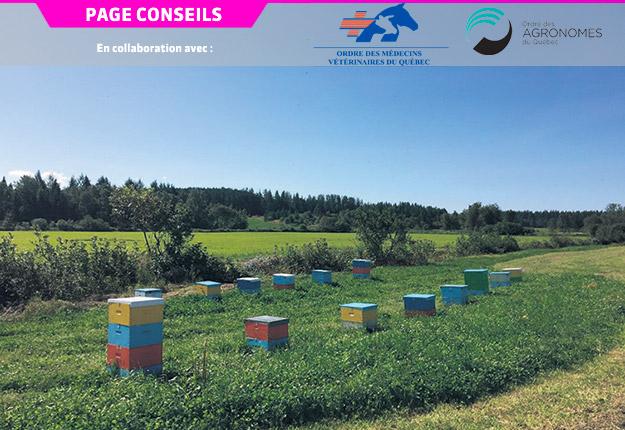 Un rucher en production dans la région de Chaudière-Appalaches. Photo : Gracieuseté du CRSAD