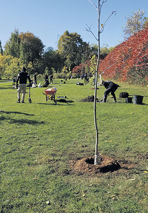 Un beigne fabriqué avec le sol tout autour de l'arbre (au-dessus de la motte) permettra à l'eau de rester en place lors de l'arrosage.