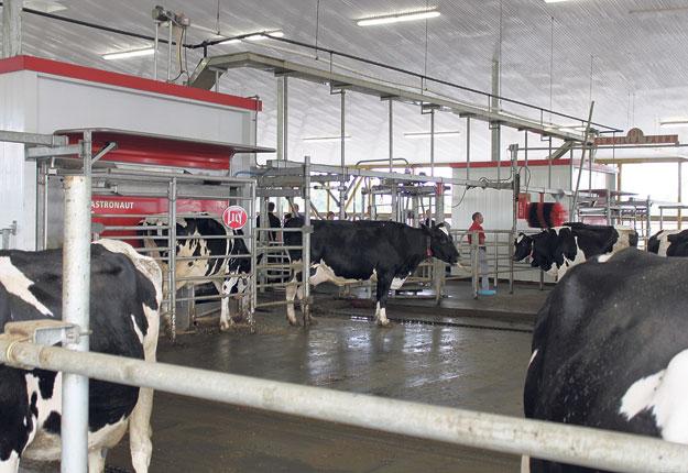 C'est connu, le fait d'offrir aux vaches une certaine quantité de moulée au robot de traite augmente la fréquence des visites au robot et la production de lait. Servieen complément de la ration partiellement mélangée (RPM) distribuée à l'auge, lamoulée, par son appétence, motive les vaches à passer au robot.