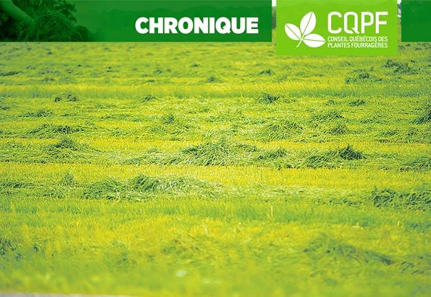 Les rendements élevés ne sont pas qu'une histoire de chance. Les producteurs qui s'occupent de leurs sols et qui savent comment optimiser leurs intrants, tels que chaux, engrais, semences et pesticides réussissent à dépasser les 10-12t/ha de MS. Photo : Archives / TCN