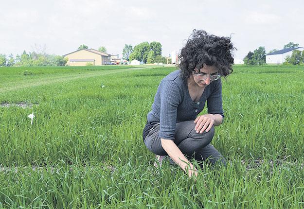 Avant d'en arriver à un nouveau cultivar, il faut «laisser la nature faire son œuvre», explique Annie Archambault, sélectionneure chez Céréla. Photos: David Riendeau