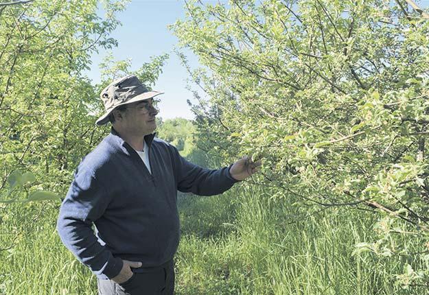 Propriétaire de la Ferme Black Creek, Denis Rousseau se passionne pour les cidres de type européen. Photo : David Riendeau