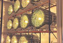 Les technologies de culture intérieure comme celles de GiGrow permettent de contrôler l'environnement des plants. Photo : Gracieuseté de GiGrow