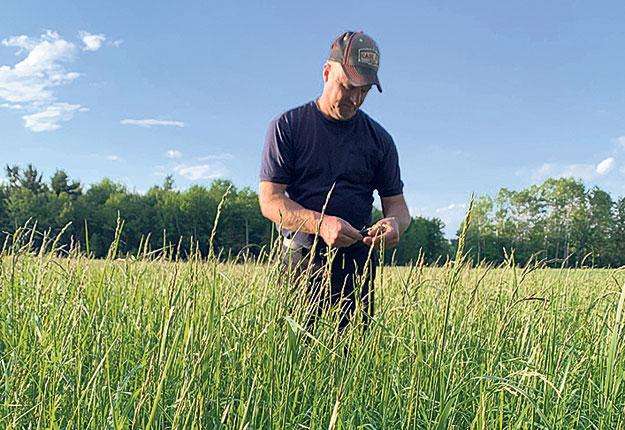 Les prairies de Ghyslain Noiseux sont ensemencées de graminées, de brome, de fétuque et de mil servant à produire du foin sec en balles carrées entièrement destinées à la vente. Photo: Ghyslain Noiseux