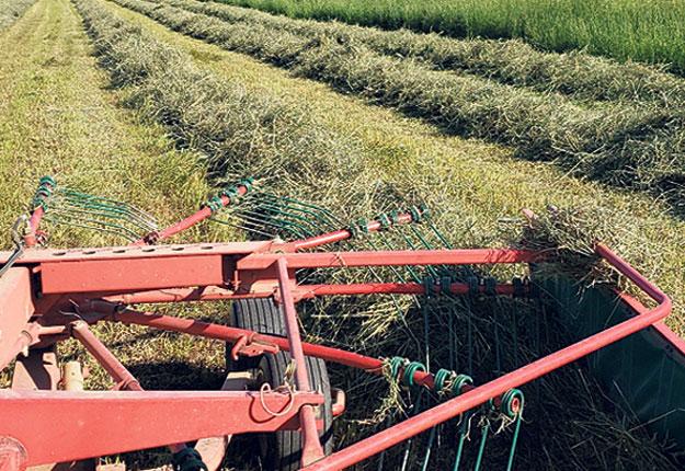 Peu de producteurs connaissent leurs rendements en plantes fourragères. Contrairement aux cultures commerciales, la majorité de la production de fourrages est utilisée directement à la ferme. Iln'y a donc pas de pesée systématique des quantitésrécoltées. Photos : Gracieuseté de Lactanet