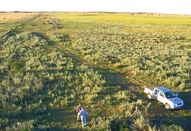 La production de fourrages totale de l'Argentine est estimée à 244millions de tonnes par an, selon l'Institut national de technologie agricole. Photo: Marc-Henry André