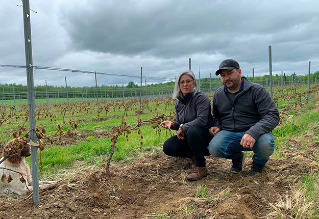 Les copropriétaires du Domaine du Cap, Zoé Bisaillon et Nicolas Baron, ne produiront pas de vin en 2021. Ils ont presque perdu tous leurs raisins. Photo : Gracieuseté de Nicolas Baron