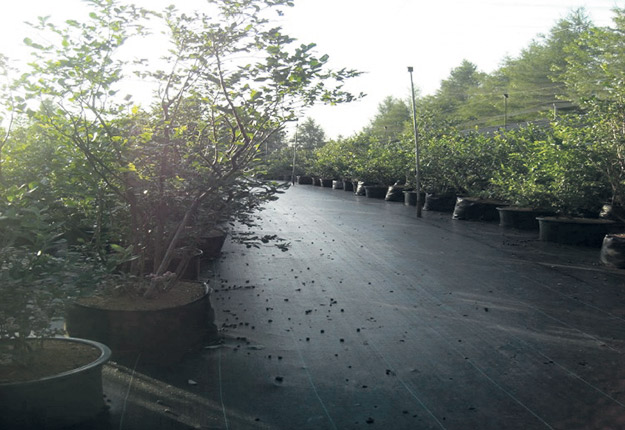 La production hors-sol s'avère une avenue intéressante dans la mesure où une ferme désire cultiver des variétés moins rustiques. Photos: Gracieuseté de la Bleuetière Parisville
