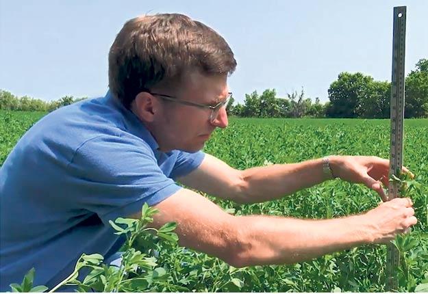 Pour prendre les mesures au champ, le producteur doit mesurer la longueur de la tige la plus haute de luzerne et de graminée, la proportion de luzerne dans le mélange fourrager et le stade de développement de la tige de luzerne la plus développée.
