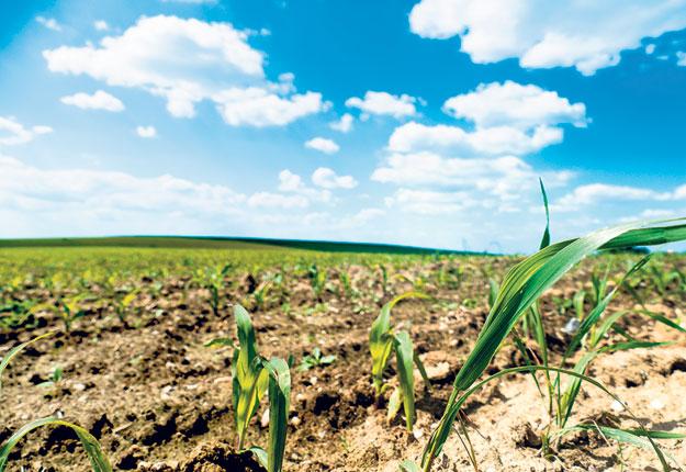 Le réchauffement climatique pourrait accroître les indemnités des polices d'assurance récolte. Photo : Shutterstock