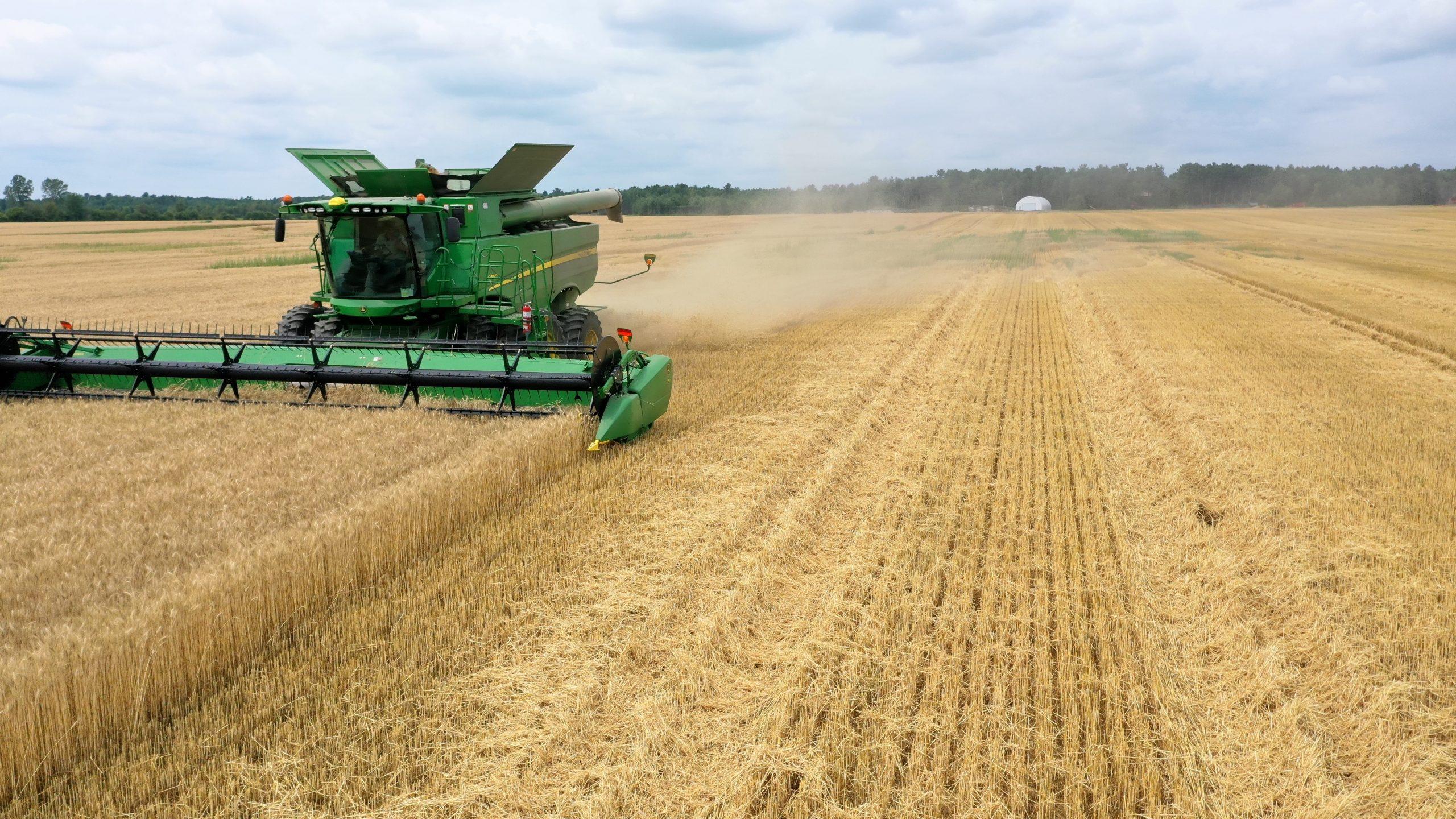 La récolte de blé d'automne est au-delà des espérances à la Ferme Diane et Denis Champagne. Photo : Gracieuseté de la Ferme Diane et Denis Champagne