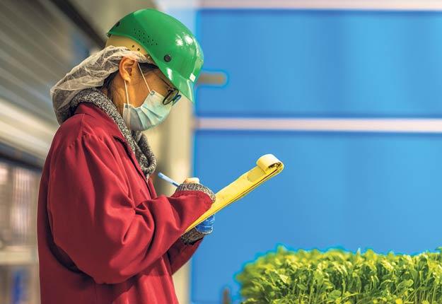 La ferme verticale GoodLeaf cultive diverses pousses, telles que de chou frisé, de roquette et de pois. Photo : Gracieuseté de GoodLeaf
