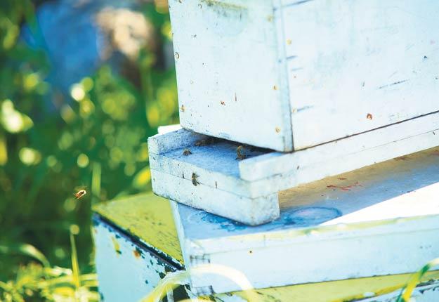 Pour certains apiculteurs, la saison est catastrophique, alors qu'elle est très bonne pour d'autres. Archives / TCN
