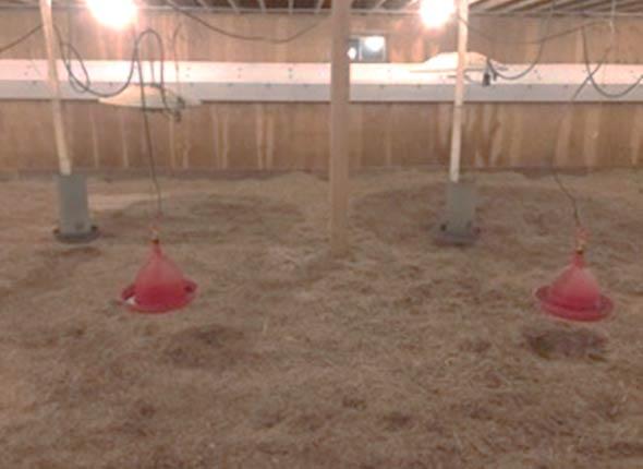 Intérieur vide d'un bâtiment d'élevage de dindons.