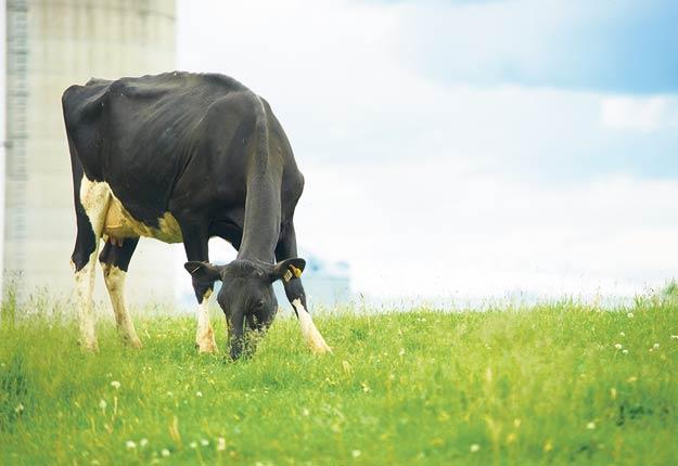 Les Producteurs laitiers du Canada veulent mieux définir la « ferme du futur ». Photo : Martin Ménard/Archives TCN