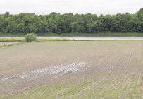 Un champ de céréales mal drainé au printemps. Photo : Gracieuseté Éric Labonté, MAPAQ
