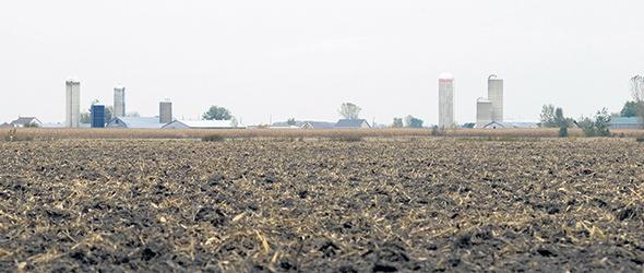 Les restes de cultures jouent un rôle majeur dans la conservation des sols; ils constituent un apport nutritionnel qui se mélangera à la matière organique du sol. Photo : Gracieuseté Éric Labonté, MAPAQ