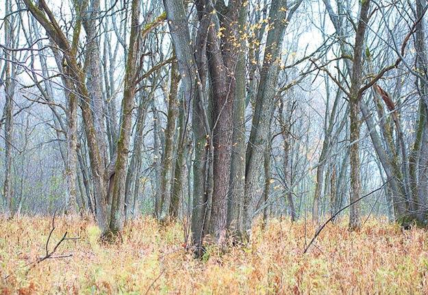 L'allègement de la réglementation environnementale encadrant les milieux humides proposé par Québec permet à bon nombre de producteurs agricoles et forestiers de pousser un soupir de soulagement. Archives / TCN