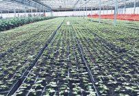 Les avancées techniques permettent une meilleure gestion des sols. Photos: Gracieuseté de EarthAlive
