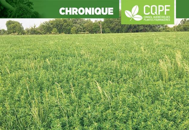 De plus en plus de producteurs se tournent vers le mois d'août pour implanter une nouvelle prairie. Photo : Gracieusetédu Conseil québécois des plantes fourragères