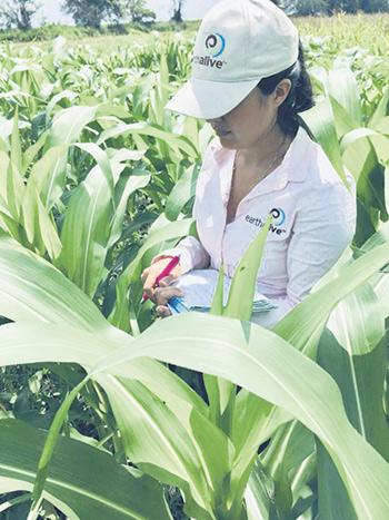 Earth Alive, une entreprise québécoise, a mis sur le marché un produit appelé Activateur de sol. Ce produit contient des bactéries bénéfiques qui prennent les nutriments du sol par le biais des racines des plantes, ce qui permet à celles-ci de mieux les absorber.