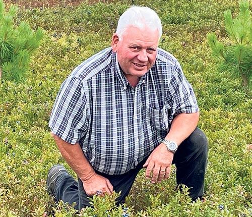 Paul-Eugene Grenon estime avoir perdu plus de 50 % de sa récolte en raison du gel, au Lac-Saint-Jean. Photo : Gracieuseté de la bleuetière Au gros bleuet