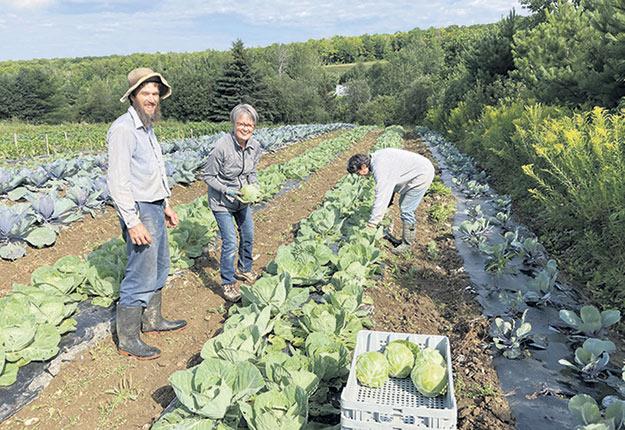 Les légumes de l'organisme sont cultivés sur les terres de la Ferme Bonne Création. Photo : Gracieuseté de Cultiver pour partager