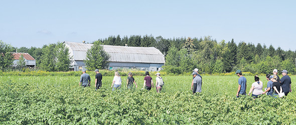 Les engrais verts étaient déjà utilisés à la ferme Proculteur, mais leurs pratiques évoluent à grande vitesse avec les essais menés avec le CÉTAB+, sans compter les essais en plein champ.